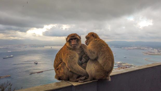 Andaluzia: Macacos de Gibraltar Espanha