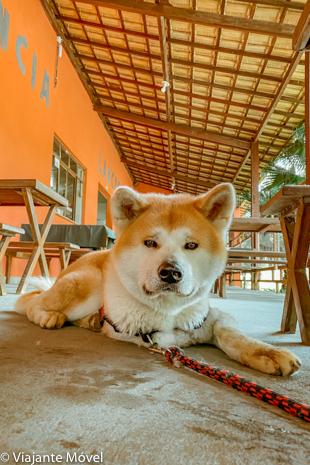 Restaurante Pet Friendly em Santa Bárbara do Tugúrio em Minas Gerais