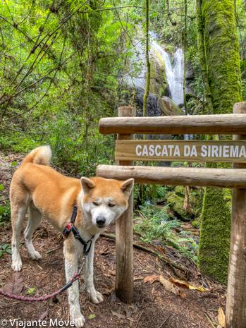 O que fazer em Monte verde  com cachorro