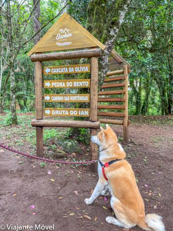 Passeios pet friendly em Monte Verde que você precisa conhecer