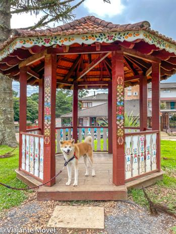 O que fazer em Monte verde com cachorro Akita
