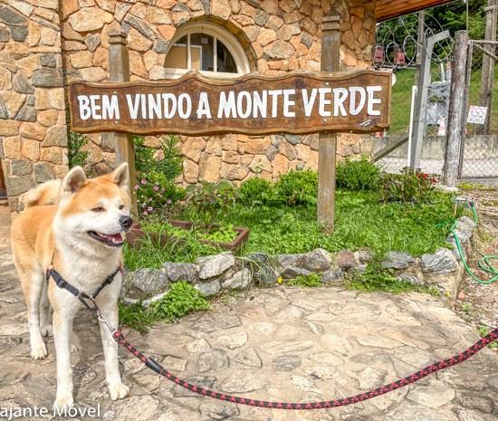 Monte Verde Pet Friendly: Dicas de um Akita