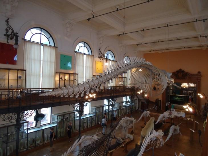 Museo Oceanográfico de Monaco - Viajar a Mónaco
