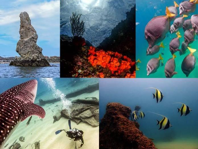 Lo mejor del buceo en Baja California - Viajar Buceando
