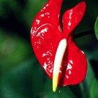 Naturaleza-Flor-01