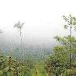 Las Neblinas En Bonao Cuna del ecoturismo