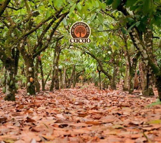Sendero del Cacao, Republica Dominicana