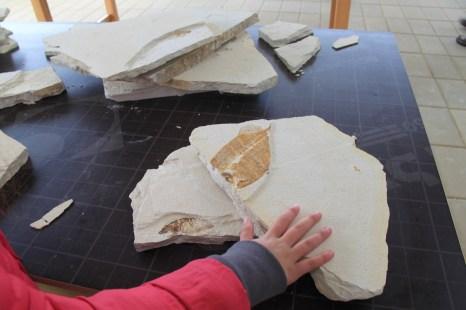 Dino Parque placas fosseis