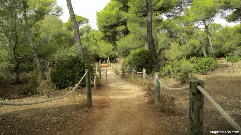 Camino Cala Macarella en Menorca
