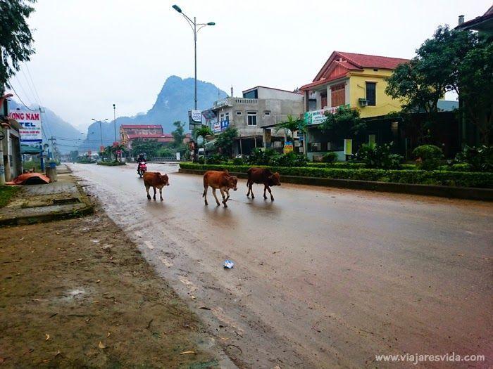 Son Trach, pueblo donde alojarse para visitar Phong Nha-Ke Bàng