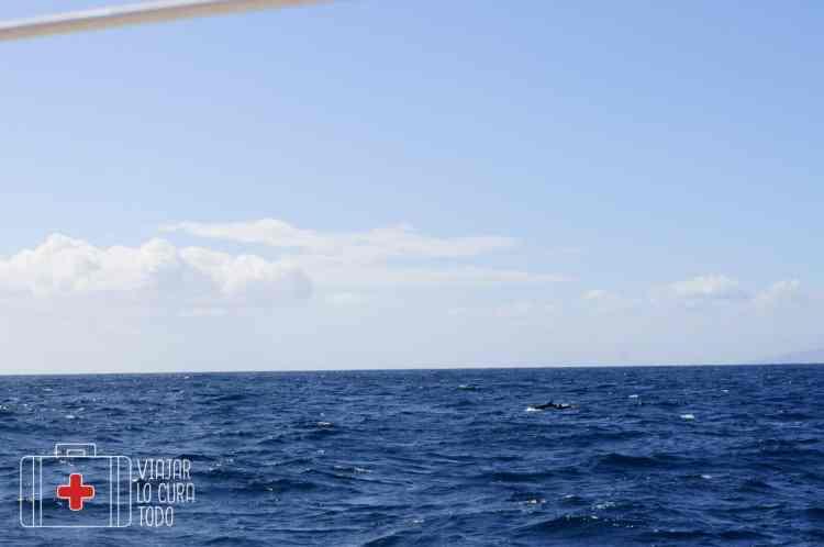 excursión ballenas tenerife