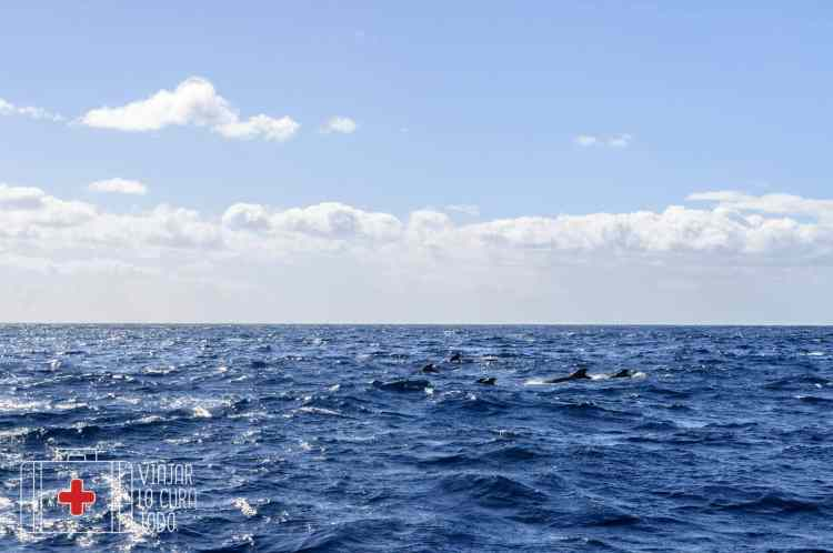 excursion ballenas tenerife (9)