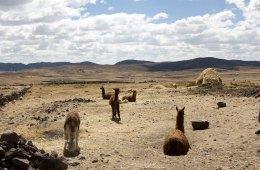 viajar a Perú por libre, piedras de ica, líneas de Nazca