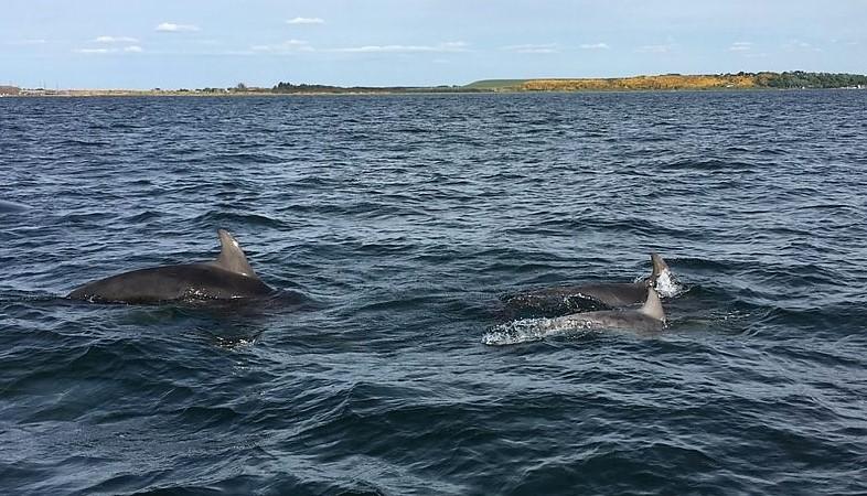 dolphin-spirit-inverness