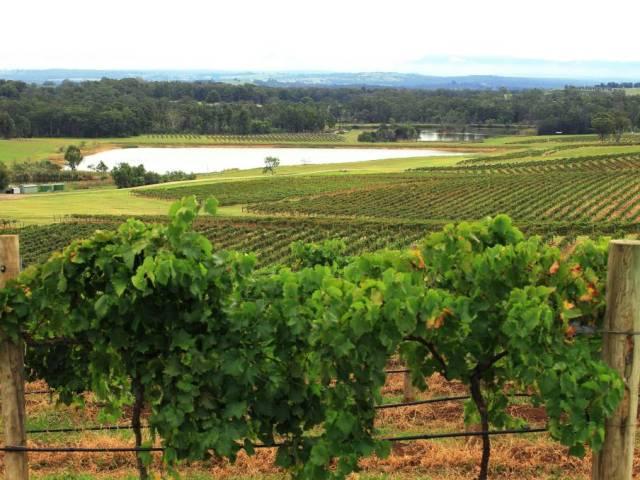 Seis destinos para los amantes del vino y el turismo enológico
