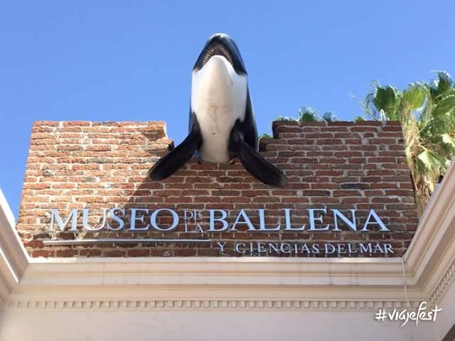 Museo de la Ballena