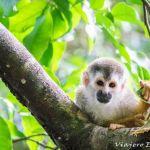 Qué ver en Costa Rica – 30 Lugares que visitar.