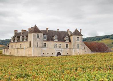Vineyard of Burgundy