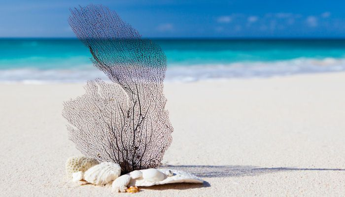 Viajes de Novios Punta Cana