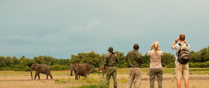 Resultado de imagen de safari a pie