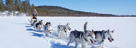 Trineo perros finlandia