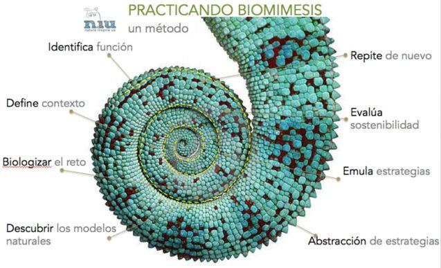 espiral de diseño de biomimesis
