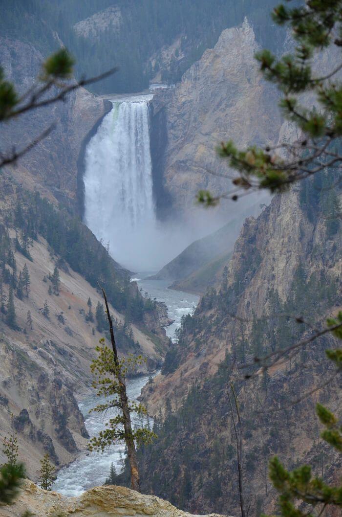 Cómo y cuándo ver los animales de Yellowstone National Park