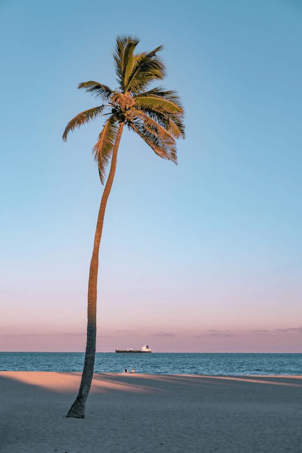 Palmeras en Fort Lauderdale