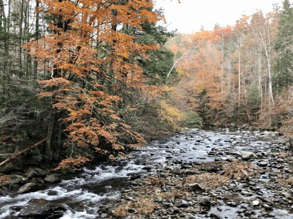 Cómo visitar los Parques Nacionales de Estados Unidos desde casa