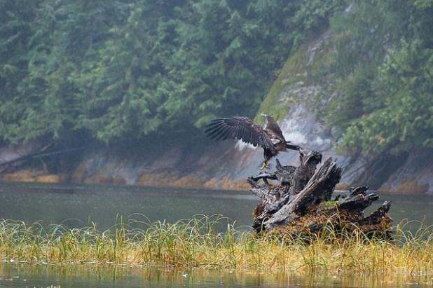 El Bosque del Gran Oso (Canadá)