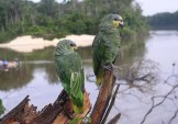 Aves del Parque Nacional de Jau