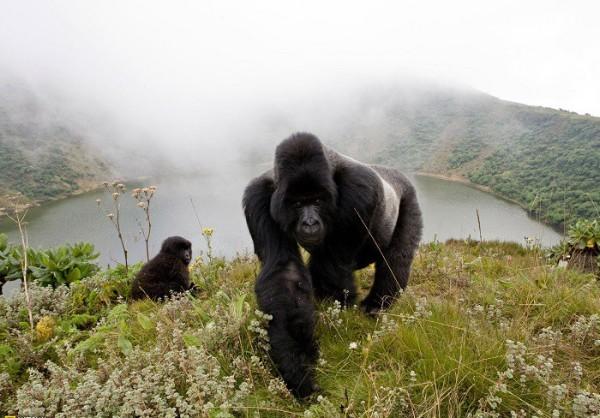 Montañas-Virunga