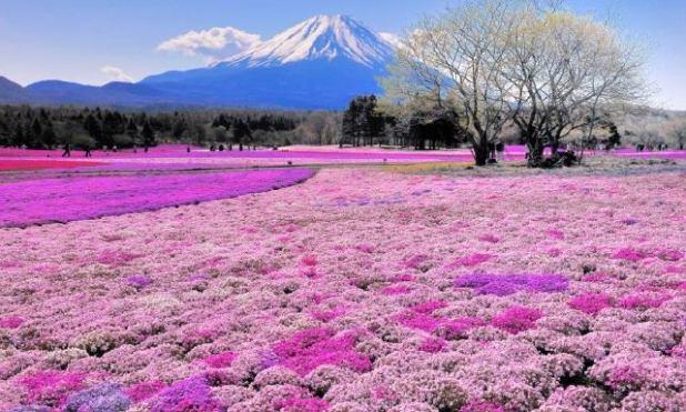 Hokkaido, Isla de Japón