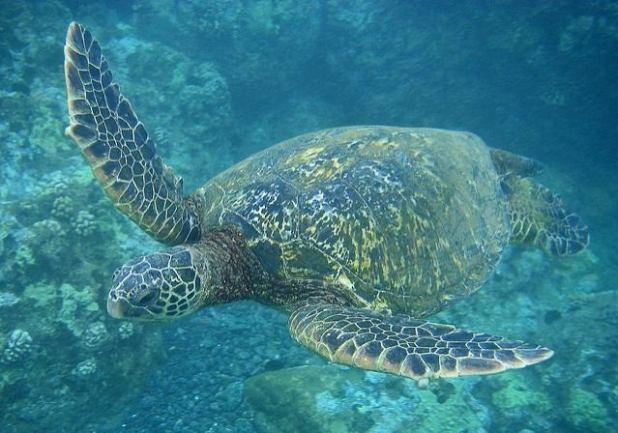 Maui-Hawaii-EEUU (4)
