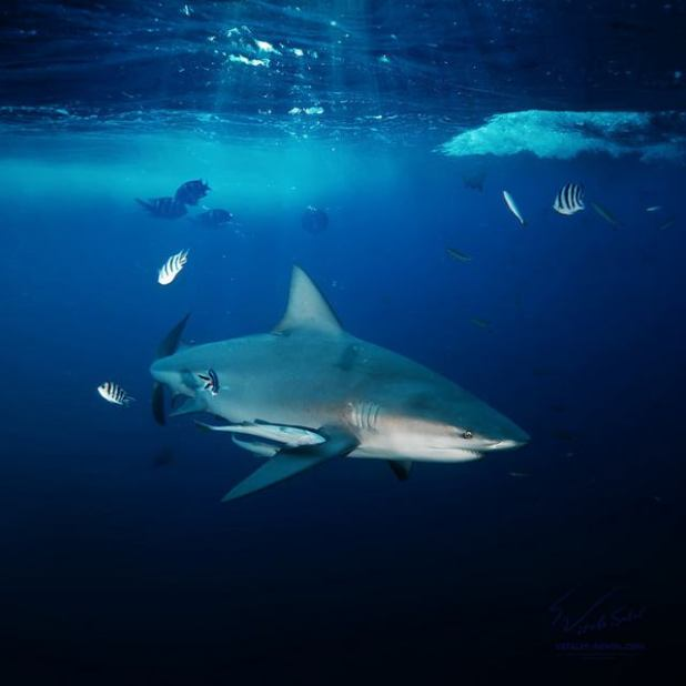 Submarinismo en Hawaii (Fotos: Vitaly)