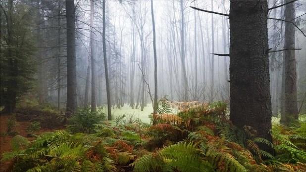 Zauberwald (Bosque encantado)