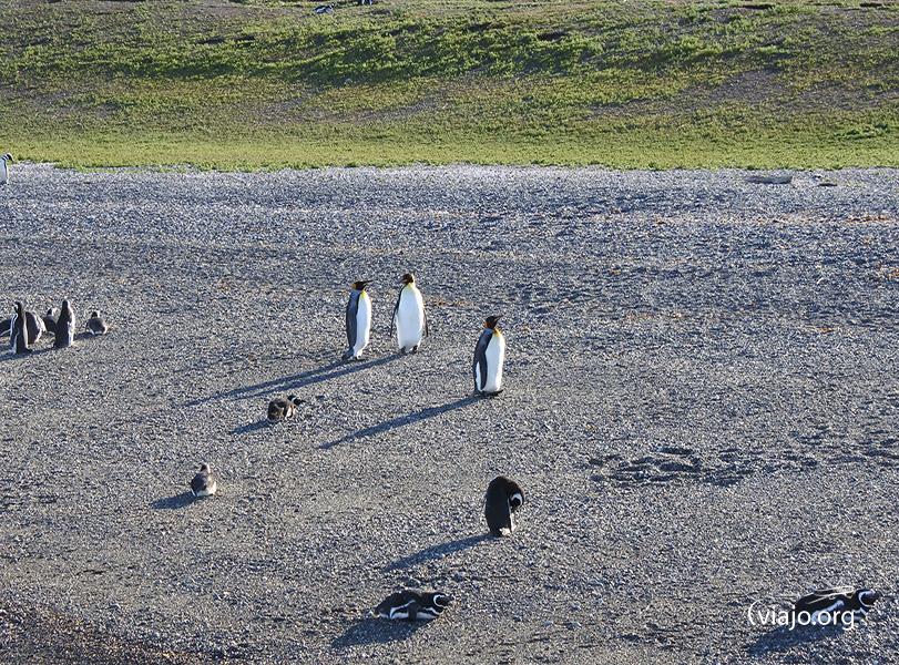 Isla Martillo Pingüinera