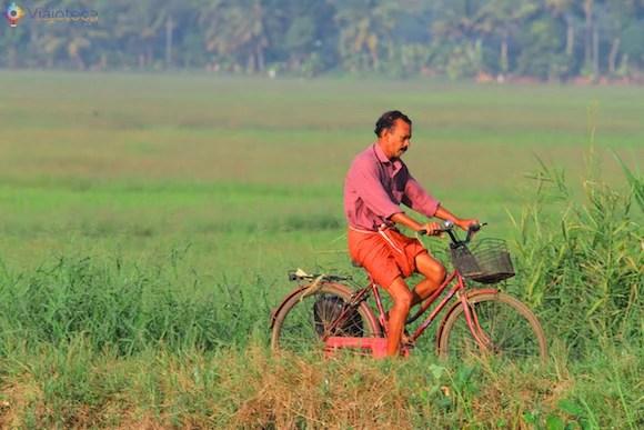 Homem andando de bicicleta em meio aos campos de arroz dos backwaters do Kerala