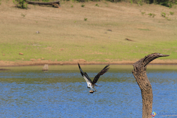 Safari na India – Lago Peryiar (33)