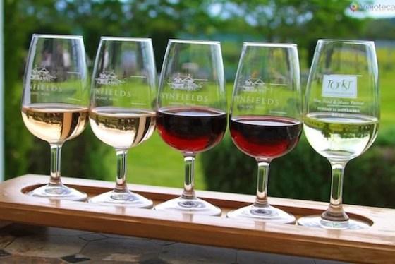 Degustação de vinhos em Martinborough