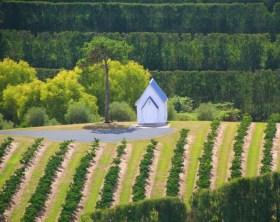 Vinicolas em Auckland - Matakana Wine Trail