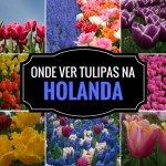 Onde ver os Campos de Tulipas na Holanda