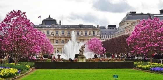 Florada das Cerejeiras em Paris Palais Royal