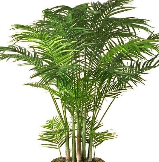 13 plantas que purifican el aire y f ciles de cuidar - Planta interior palmera ...