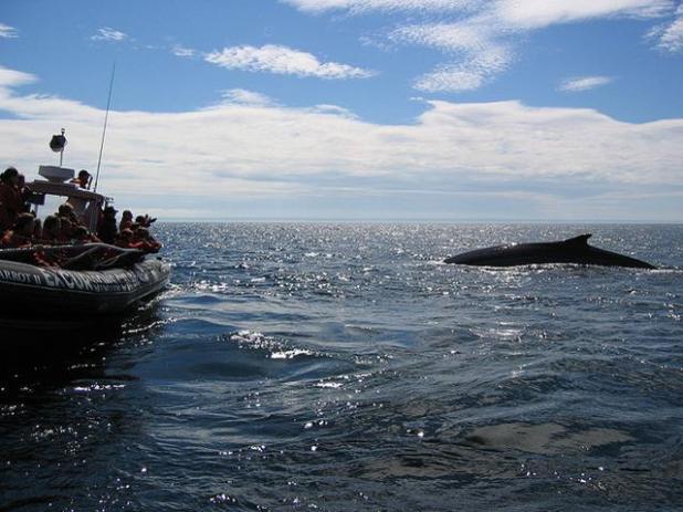 Ballenas en Canadá