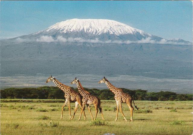 Klimanjaro (Tanzania)