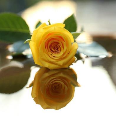 Significado De Las Rosas Rojas Fucsias Blancas Sin Espinas