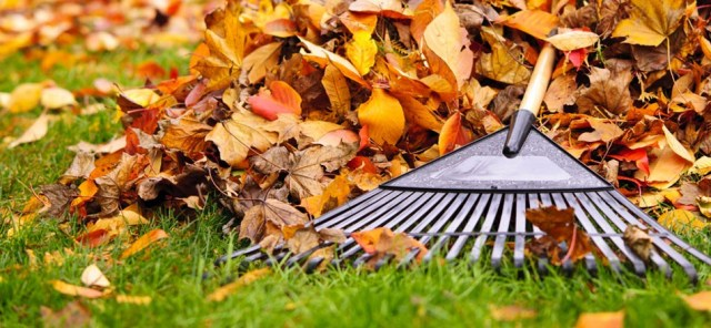 sweeping-up-the-autumn-leaves