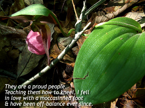 Poem: 'They are a proud people. Teaching them to kneel, I fell in love with a moccasinned foot, and have been off-balance ever since.