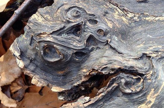 Close-up of the dark, weathered grain in a log with a cluster of swirling, eye-shaped knots.